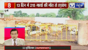 215 cows died due to starvation in a BJP leader Gaushala in Chattisgarh