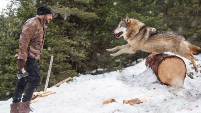 Tiger-Zinda-Hai-Promo-salman-khan-fighting-with-wolves,-watch-Tiger-vs-Wolves