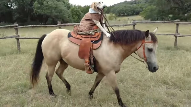 Dog, Horse, Riding, Horse Riding, Youtube Video, Social Media, Viral Video, India News