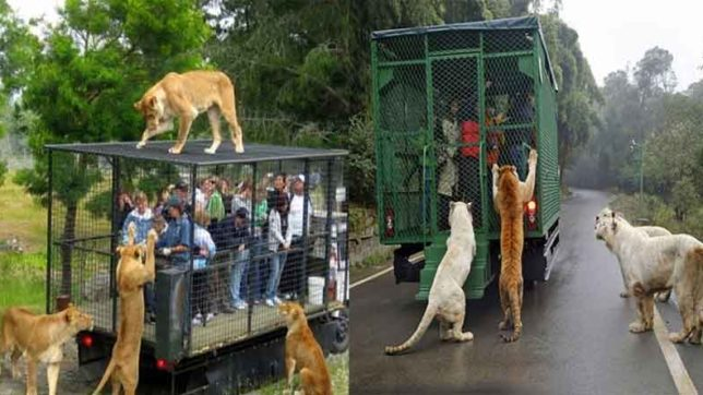 chinese zoo, China, Zoo, weird news, Latest News, Animals, China News, Lehe Ledu Wildlife Zoo International News