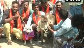 Bharat Hindu Front workers get a dog and a donkey married in protest against Valentines Day 2018